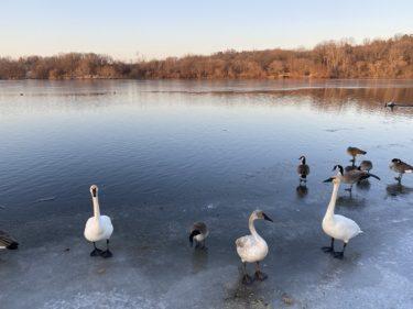 【アメリカの冬の防災対策】停電・エアコンの故障・水道管凍結など