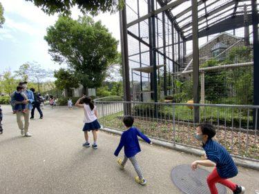 【帰国子女の英語維持】海外赴任後5歳・インタープリからの小学校とキッズデュオ